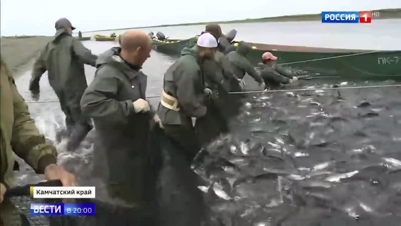 Небывалый улов на Камчатке рыба мешает движению судов - Россия 24