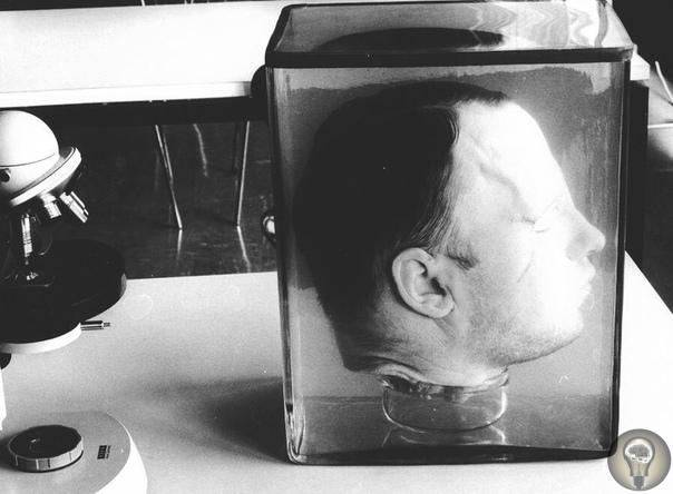 Голова немецкого серийного убийцы Фридриха Хаармана