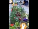 Живи сохраняя покой Придет время и цветы распустятся сами