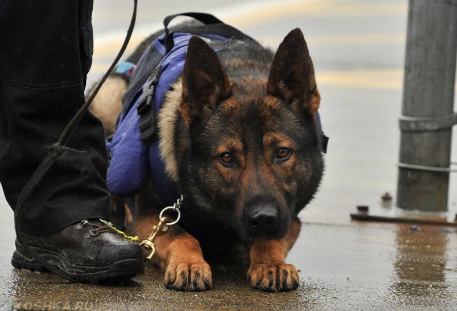 В Марий Эл служебная собака помогла разыскать похищенное