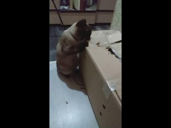 Когда коту нечего делать