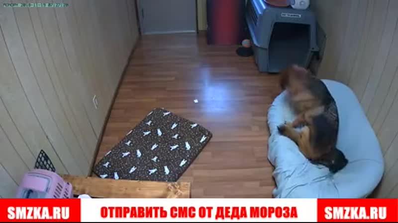кот не там лег