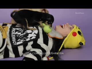Billie eilish plays with puppies while answering fan questions (русская озвучка)