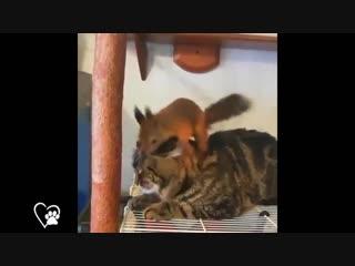 кот с белкой