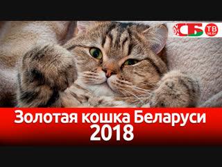 Золотая Кошка Беларуси  2018   Выставка в Минске   СТРИМ