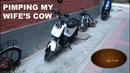 Pimping my wife's cow!   XIAO NIU   Beijing