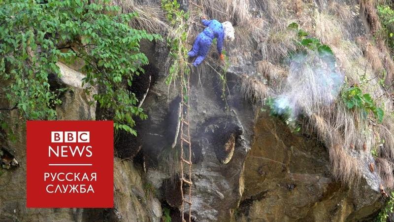 Добраться до улья как работают непальские охотники за медом