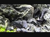 Aquascape Rusty Tiger Aquarium with Seiryu