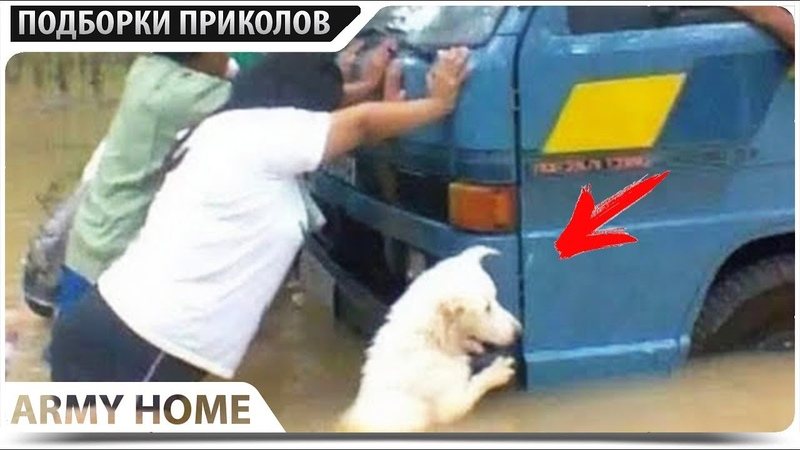 ПРИКОЛЫ 2019 Май 537 ржака до слез угар прикол - ПРИКОЛЮХА