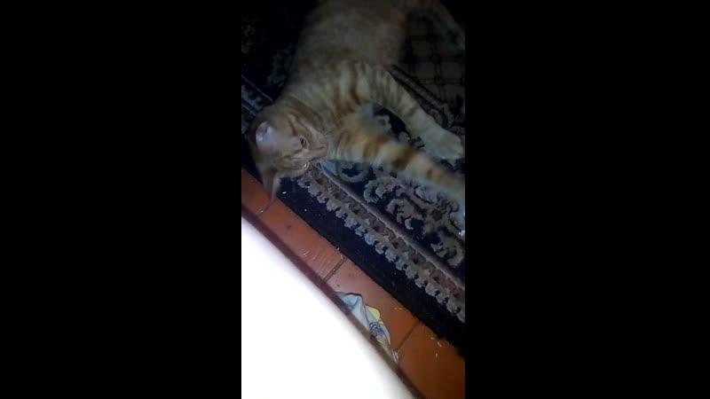 Игра с котиком