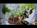 рыбки в аквариуме 3 л