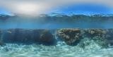 Reef Diving in Queensland, Australia. #coub, #коуб