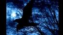 ЖАННА БИЧЕВСКАЯ- Черный ворон