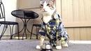 Pavlov's kitty!