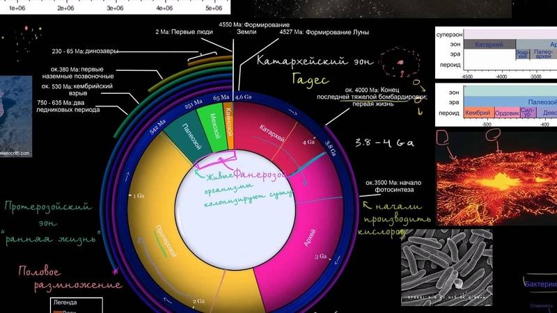 Расцвет биологического разнообразия в фанерозойский эон
