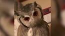 Owl transformer Сова трансформер