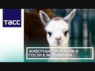 Животные приехали в гости к москвичам