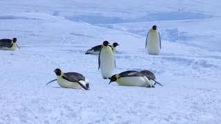 Веселые пингвины. Приколы с пингвинами