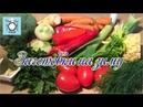 Заготовки на зиму Приправа заправка для супа мяса овощей и соусов