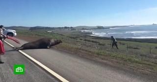 Береговая охрана в США помогла морскому слону вернуться в океан