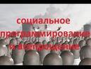 RiReRa МЫСЛИ ПАРАНОИКА №106 Социальное программирование и всепрощение 09 09 18
