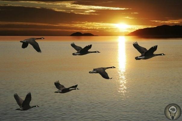 ЗАЧЕМ ПТИЦЫ ВОЗВРАЩАЮТСЯ С ЮГА Почему птицы улетают в теплые края, а потом возвращаются на север Наверное, каждый пытливый ум задавался таким вопросом. Кроме очевидных причин, есть еще несколько