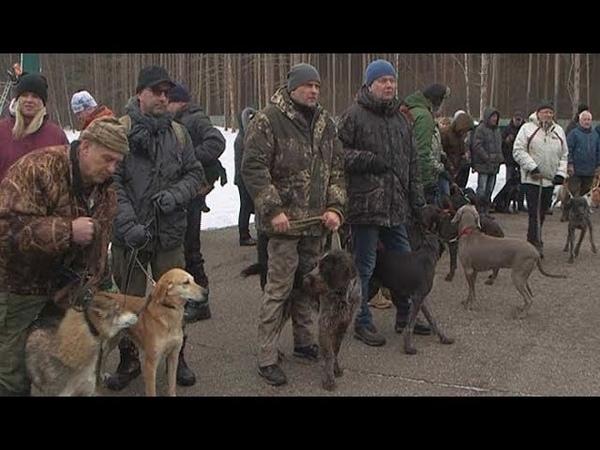 В минувшую субботу прошла выставка охотничьих пород собак