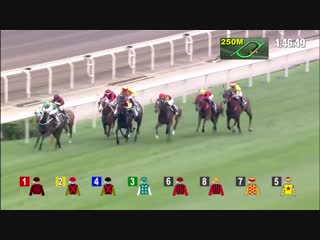 Pakistani Star _ What a Horse _ What a race_ We are best in the World_Horse Race