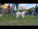 Харьков, выставка собак, стадион Пионер, 08,09,05,2017, репортаж, обзор, слайд-шоу