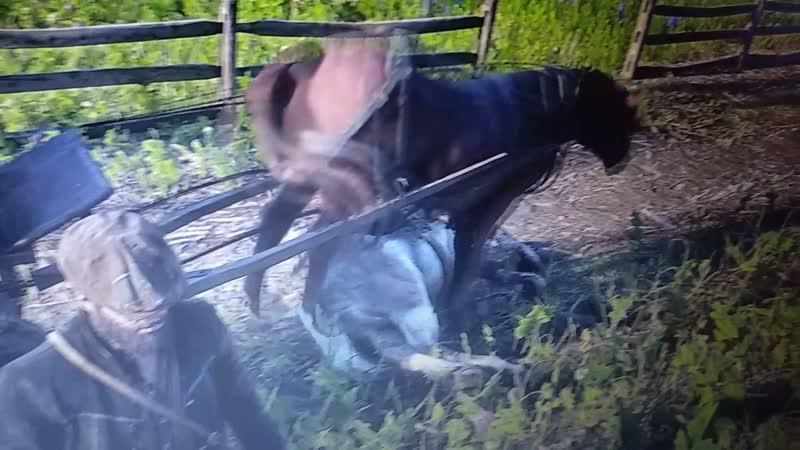 лошадь некрофил