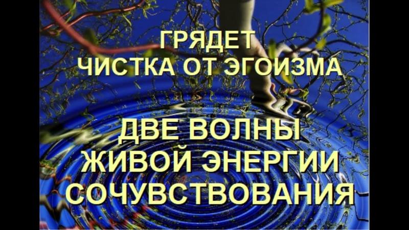 ВОЛНА СОЧУВСТВИЯ ЧИСТКА ОТ ЭГОИЗМА Александра Барвицкая Женьшеневая Женщина