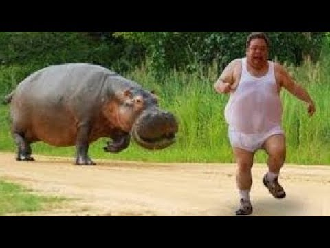 Chào thua các mẹ đông vật đi sở thú gặp sở khanh bị ăn híp lũ động vật ngáo ngơ tấn công người