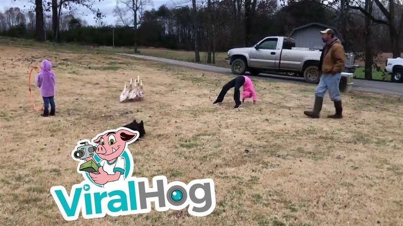 Владелец пастушьих собак устроил незабываемое шоу для своих племянниц