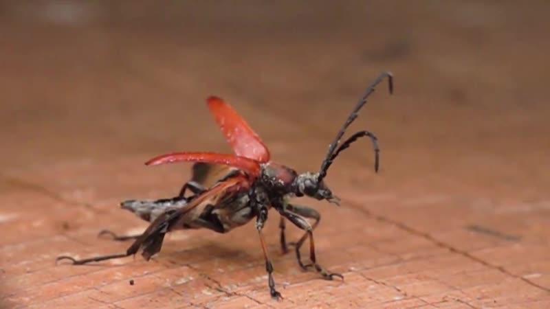 полет насекомых