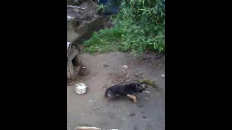 Video-2013-06-02-08-14-02