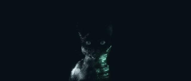 Follow the Black Cat.