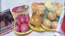 Мой любимый томат - де Барао, и все его разновидности..