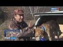 Состязания гончих псов проходят в Краснокутском районе