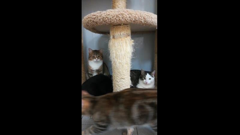 Котики - дикари