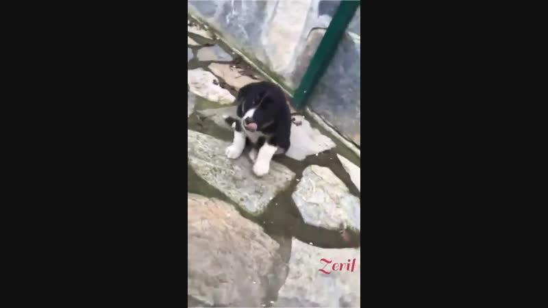 Video-1544556689