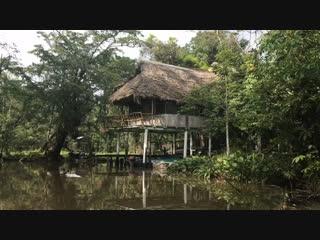 Гватемала или мои прекрасные джунгли!!!