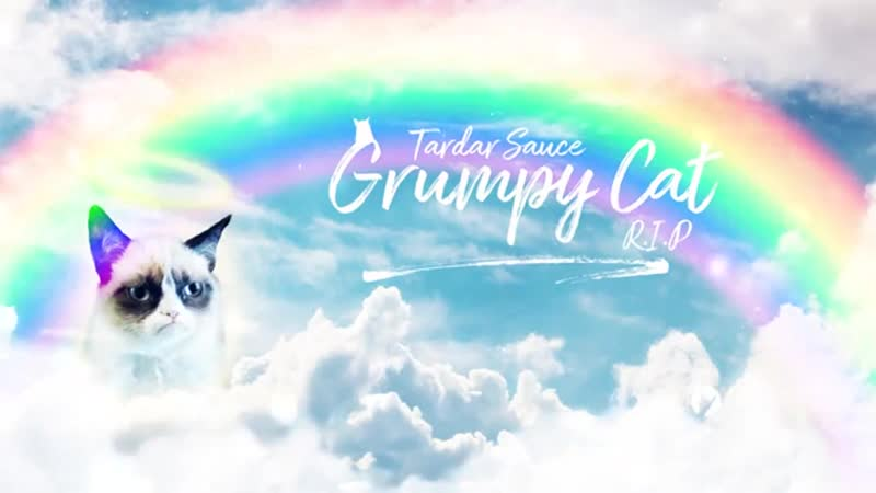 Goodbye Grumpy cat.Thanks for the amazing memes [r.i.p 2012-2019]