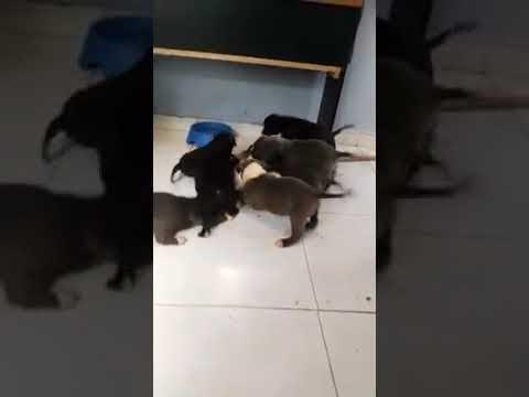 A triste vida de um gato que mora com vários cachorros