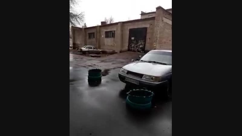Стая собак в районе остановки Гостиница Ашкадар в Стерлитамаке