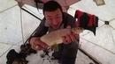 Ловля сига и щуки в Якутии. Объявление о розыгрыше призов на канале Клевая рыбалка!