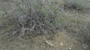Шопан Ата святое место в Мангыстау ящерицы бегают по некрополю