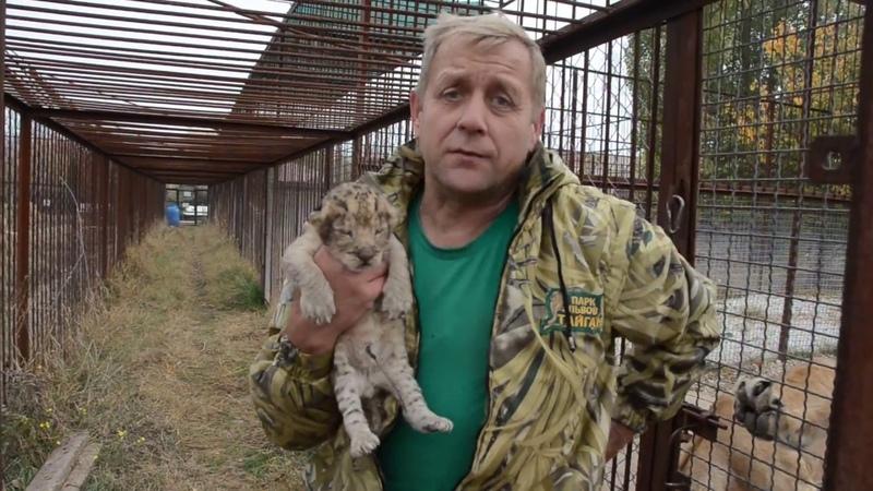 Львенка спасли, другой под угрозой!