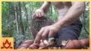 Primitive Technology Making poisonous Black bean safe to eat Moreton Bay Chestnut