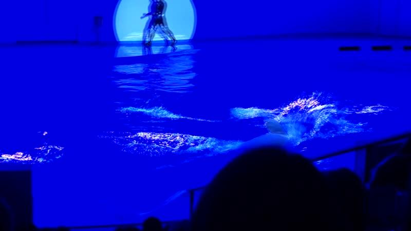 Белуха, белый кит