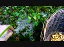 Лисички под снегом